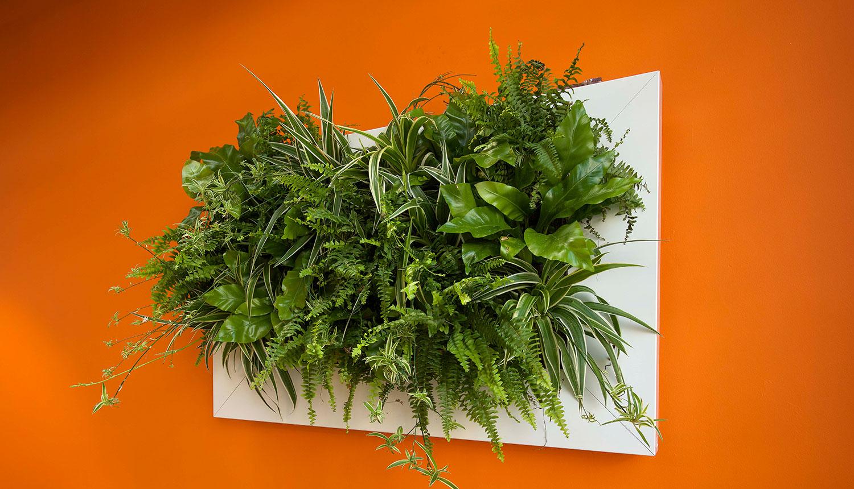 PlanteriaLivePanel1