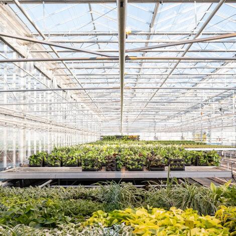 Mobilane LiveCassettes met beplanting