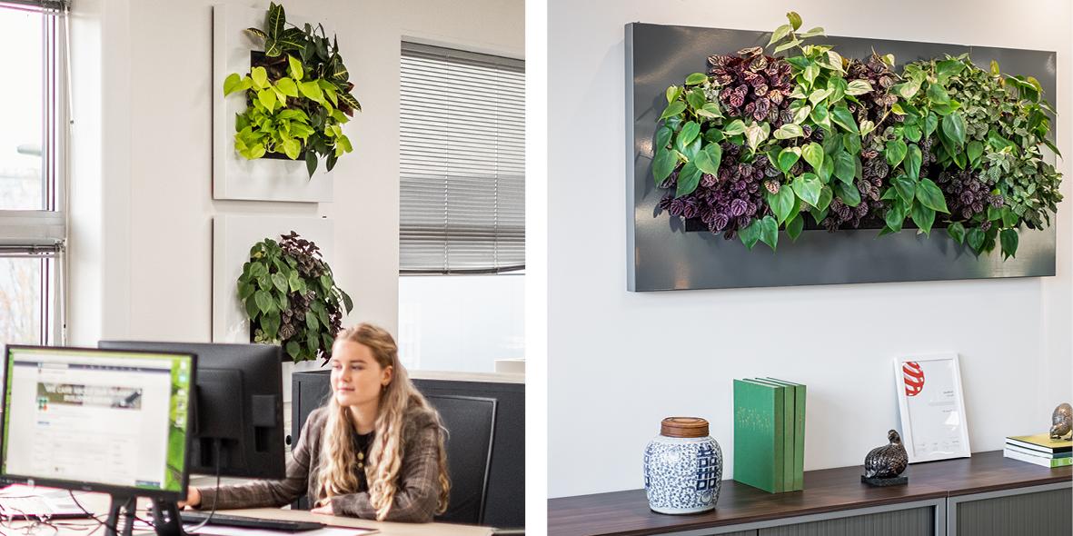 Mobilane LivePicture levend planten schilderij