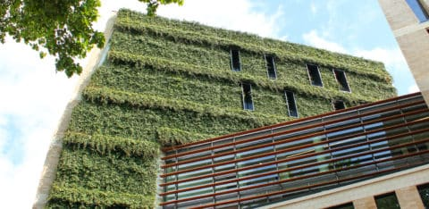 WallPlanter-Hasehaus-Osnabruck-Germany-2014HR11-480x234
