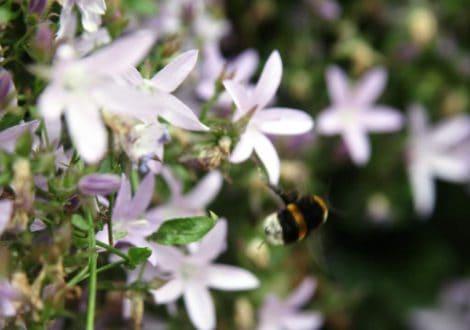 Bumble-bee-3