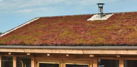 Why is a green roof a smart investment?