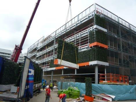 Lister-Hospital-WallPlanter-installation