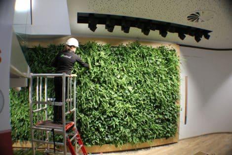 Living-wall-maintenanceA