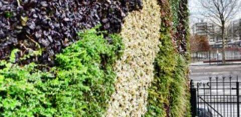 Versteende-wijken-worden-steeds-groenerRotterdam-480x234