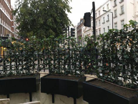 Living Green Screens Victoria London 3