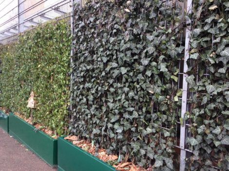 Mobilane Ivy Green Screen, installed by Meristem in Sutton