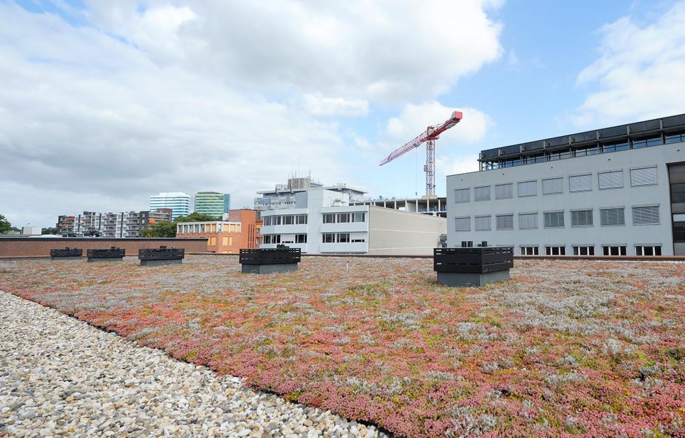 Mobilane MobiRoof groen dak systeem Arnhem