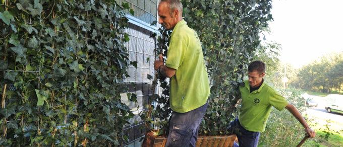 Mobilane NoiStop Zwolle groene hagen geluidswand Header