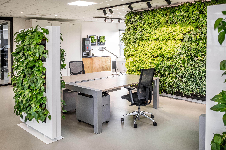De kantoortuin verbeteren door planten