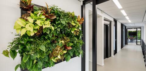 Mobilane LivePanel 6 voordelen van planten op je kantoor