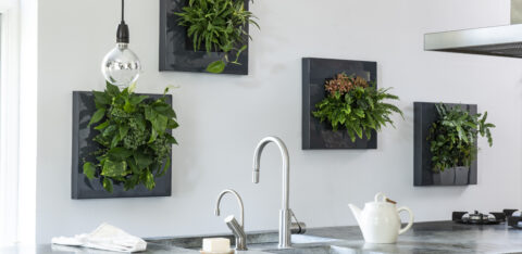 10 benefits of houseplants in the home