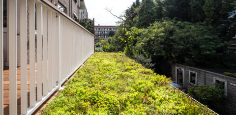 The importance of a green city