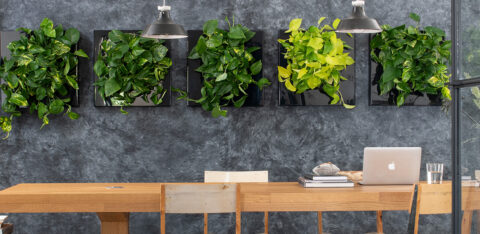 Mobilane LivePicture GO 10 benefits of houseplants in the home
