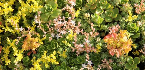 Mobilane MobiRoof groen sedum dak goed voor de biodiversiteit