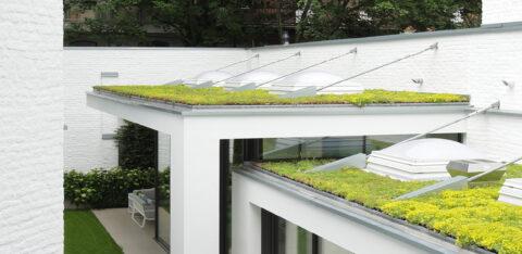 Mobilane website Header MobiRoof Groene daken houden de stad koel tijdens hittegolf
