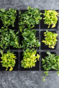 Mobilane LivePicture GO 10 voordelen van Planten in huis