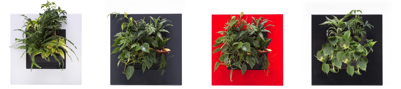 Mobilane LivePicture GO de 10 voordelen van planten in huis
