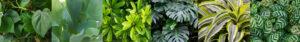Mobilane-Pflanzentrend-Urbaner-Dschungel