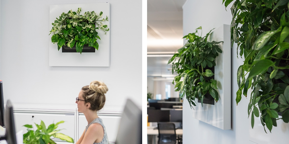 Living plants and art combine in office in Bristol