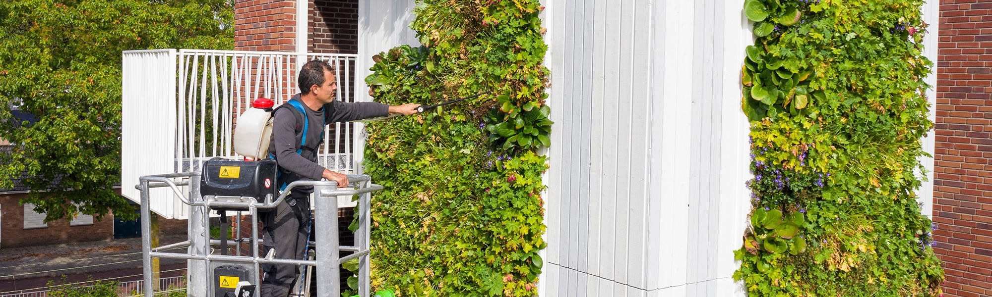 Mobilane LivePanel Outdoor groene gevel: Hoe onderhoud ik een groene gevel