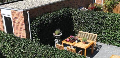 Mobilane Voordelen van groene schuttingen in de tuin