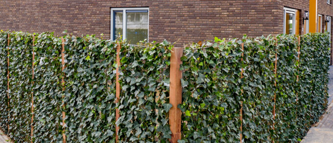 Mobilane website Header Immediate privacy with green boundary fence at new residential area in Tiel