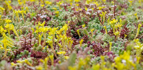 World Green Roof Day: the power of green roofs
