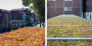 Mobilane MobiRoof 2 World Green Roof Day