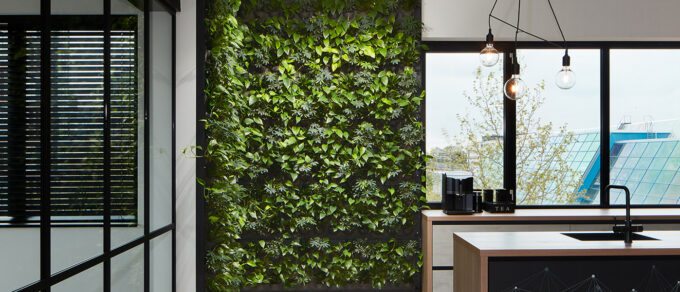 Mobilane LivePanel Indoor Plant walls at the office of Online Marketing Agency iClicks