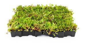 Mobilane MobiRoof ECO green roof