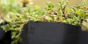 Mobilane MobiRoof ECO close-up Sedum Kassette